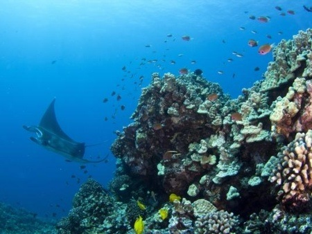 Kona Manta Ray Night Dive