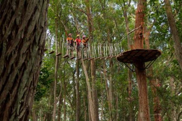 No categoriesNorth Kohala Canopy Zipline Adventure