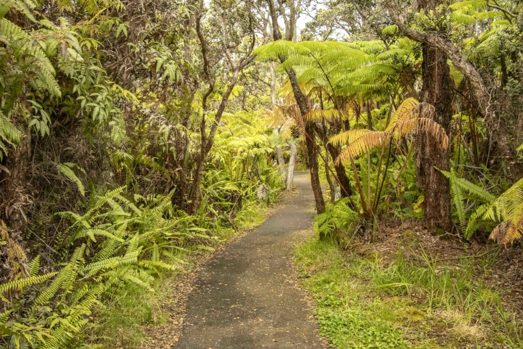 Fern Forest Trail at Volcanoes National Park Big Island