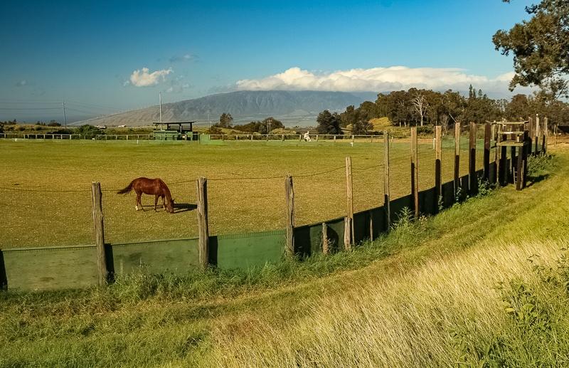 Polo Field near Pukalani