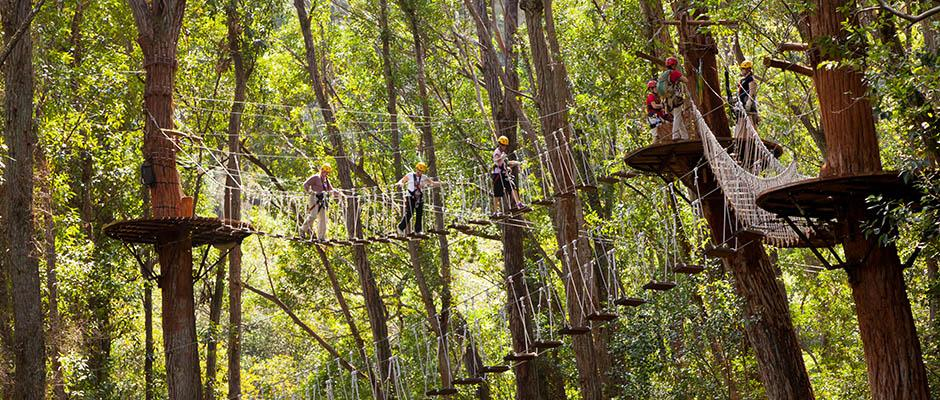 North Kohala Canopy Zipline Adventure