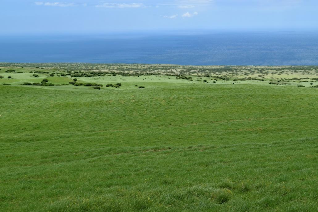 Green Parker Ranch Lands Waimea