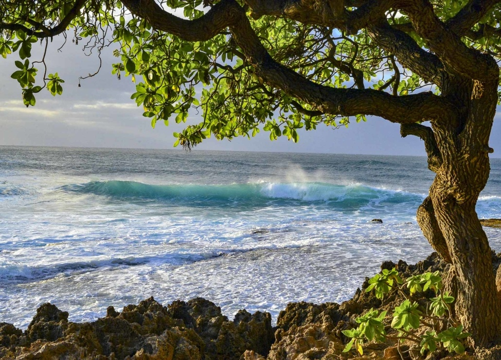 North Shore Oahu Surf Cove