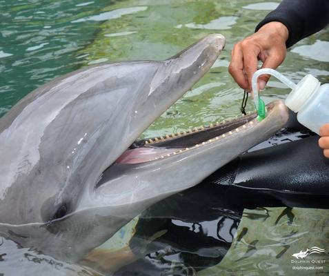 Waikoloa Dolphin Encounter