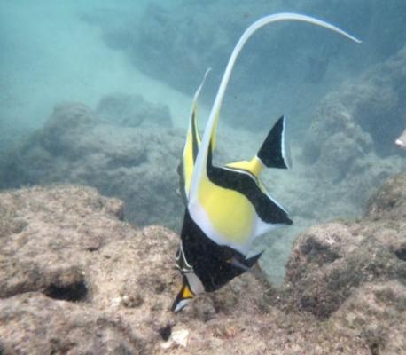 Hanauma Bay Snorkel