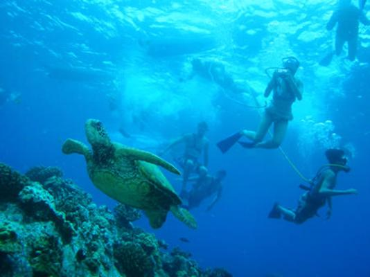 Snuba Divers underwater taking photo of Sea turtle