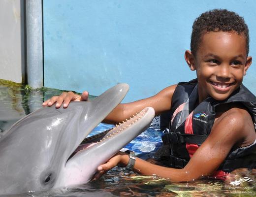 No categoriesWaikoloa Dolphin Encounter