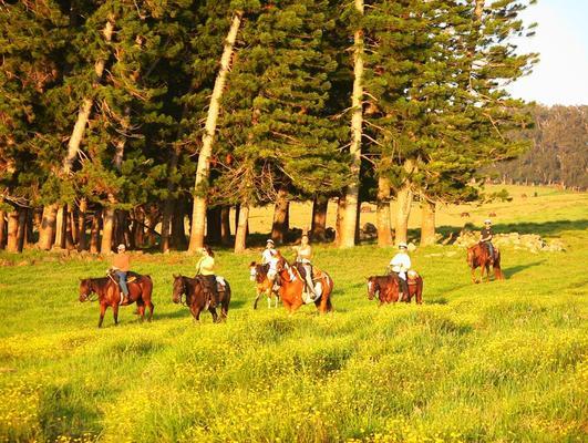 Horseback Tour Big Island