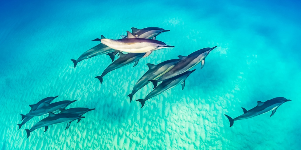 Dolphin Pod Underwater Sandy Bottom shutterstock