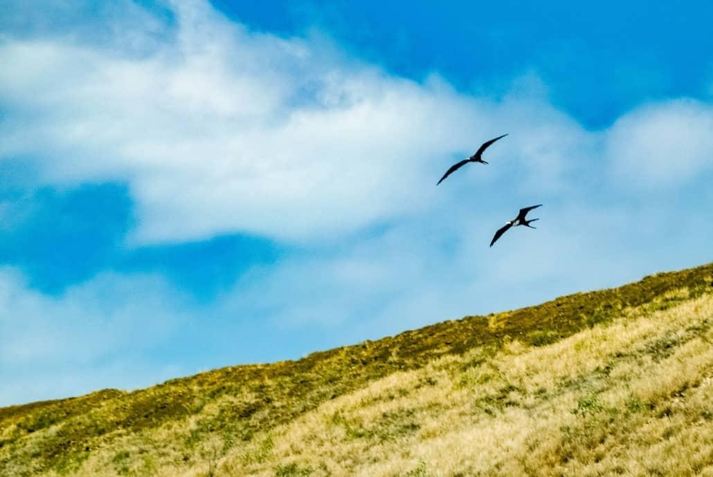 Iwi Birds at Molokini Crater Maui