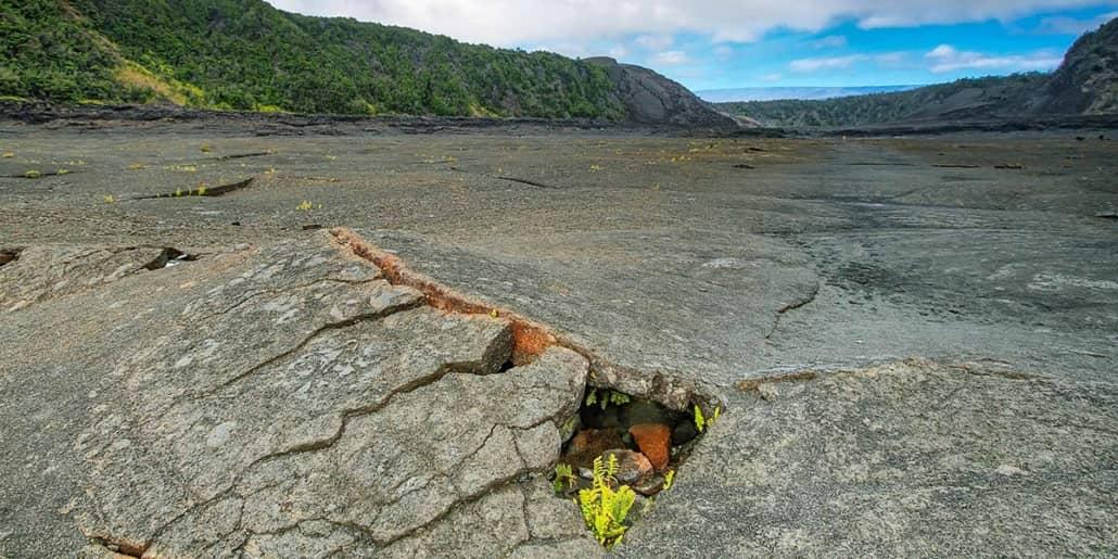Kilauea Iki Crater Floor Fern shutterstock