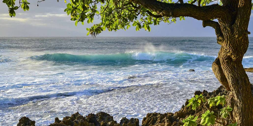 North Shore Oahu Surf Cove and Tree shutterstock