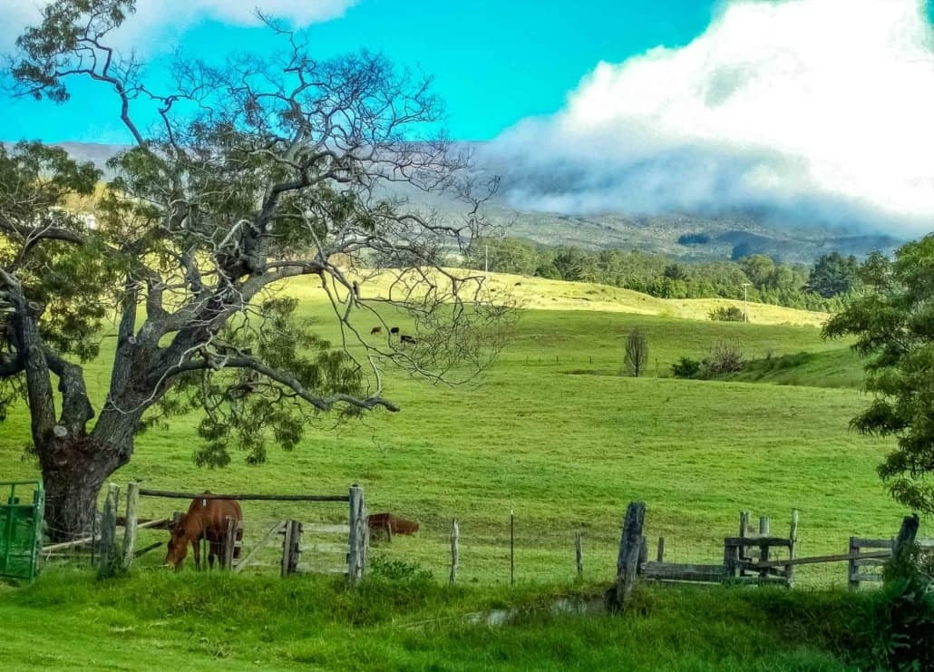 Pasture Lands and Horses at Haleakala Ranch Kula Maui