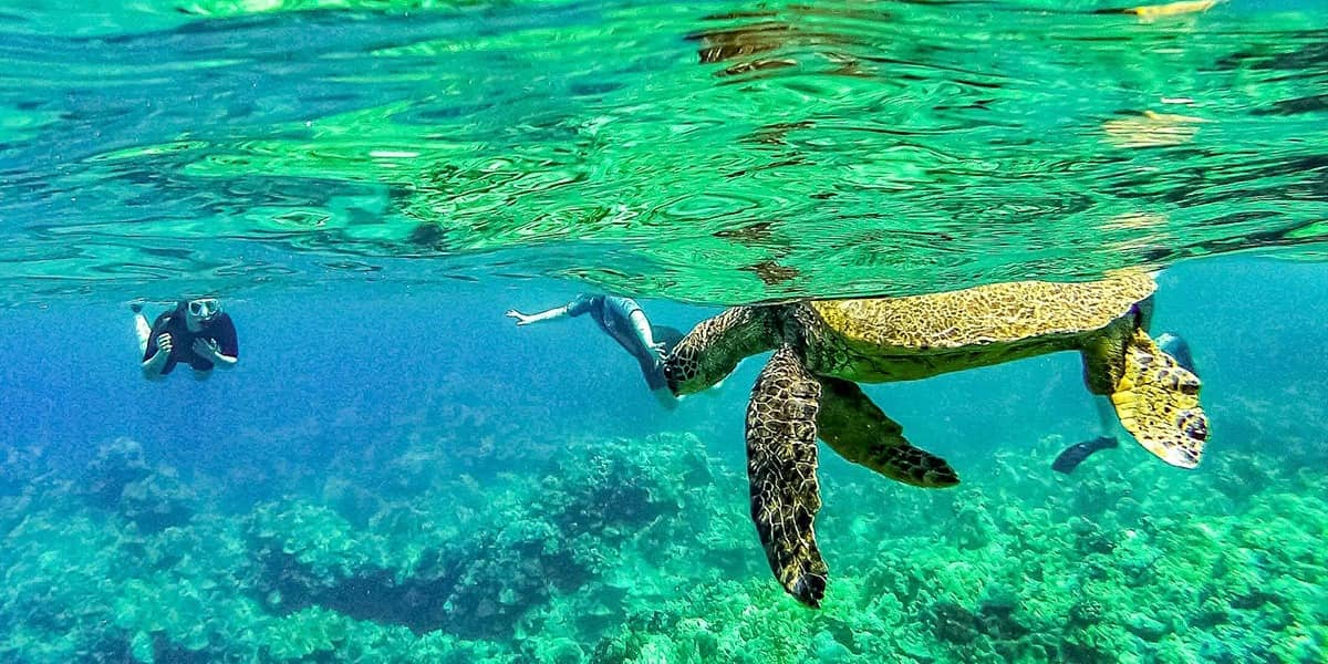 Sea Turtle and Snorkelers 1200x600