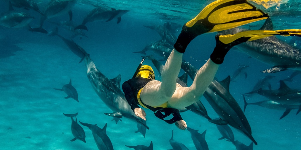 Snorkeling With Dolphins shutterstock