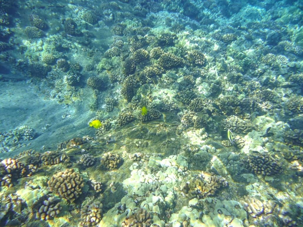 Underwater Reef Ocean Snorkel Fish Coral Hawaii