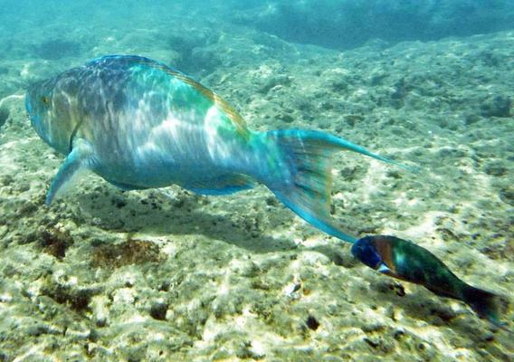 Beautiful Hanauma Bay underwater snorkeling photo