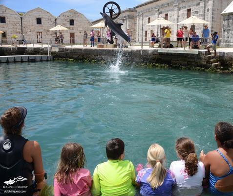 Waikoloa Dolphin Performance