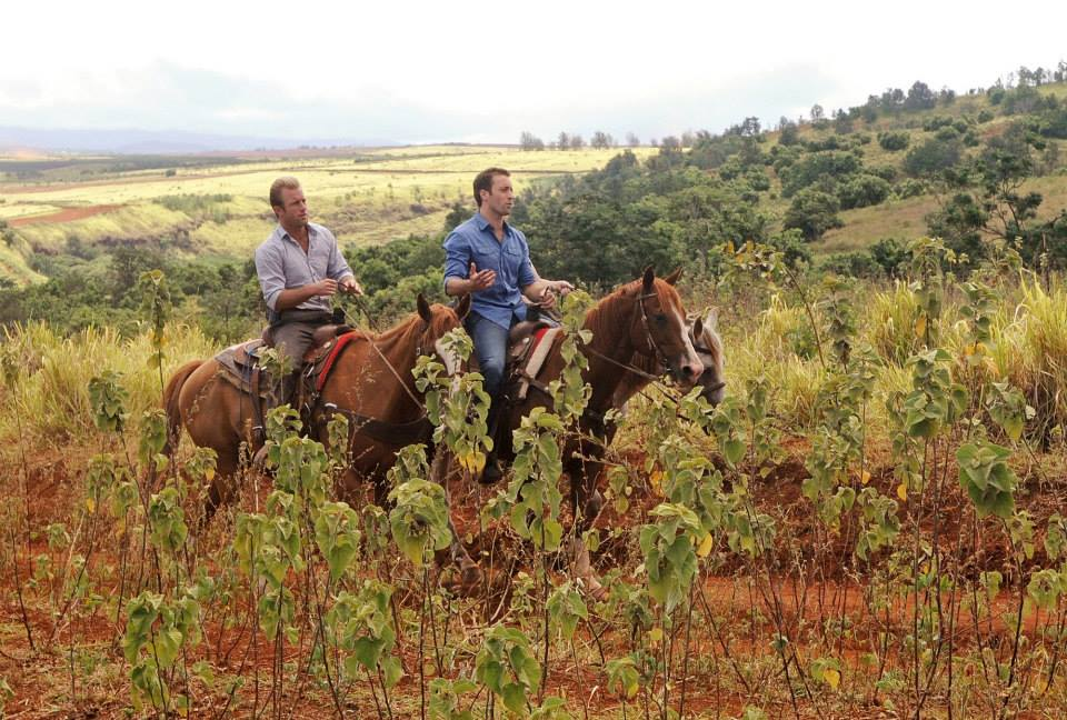 horseback ride hawaii 5-0