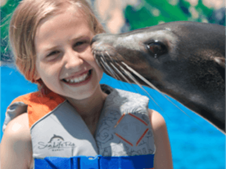 Sea life park Sea Lion Encounter kissing kid