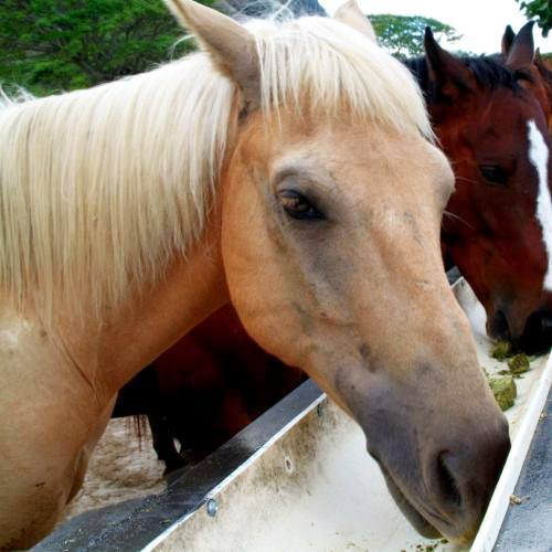 Well-Trained Horses