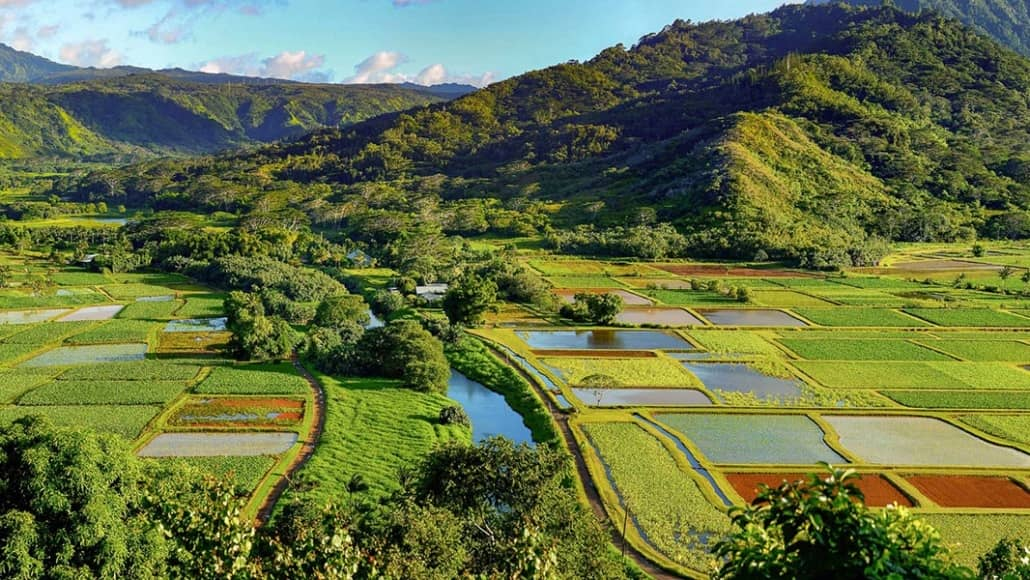 Hanalei Valley Taro Fields River Kauai