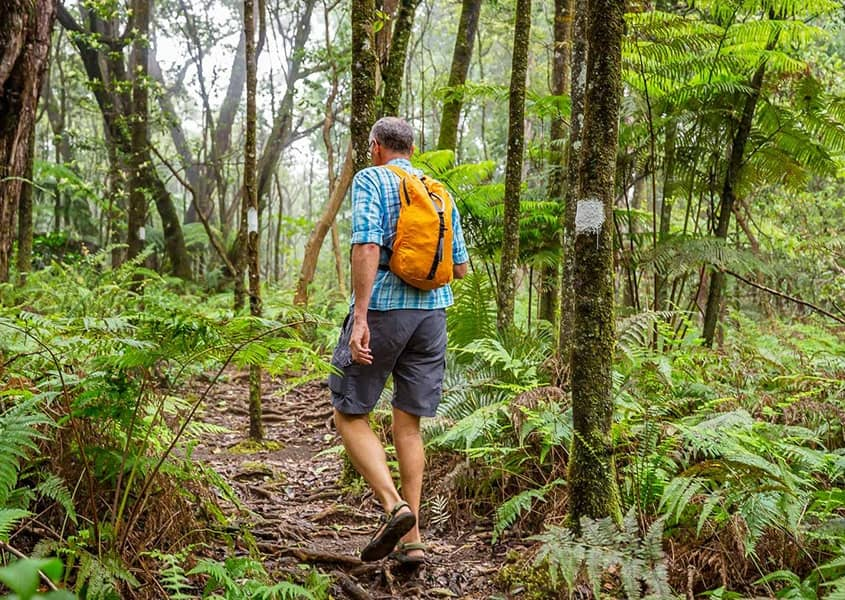 Hawaii Rainforest Hiker shutterstock