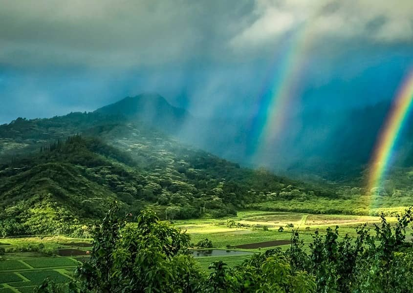 Kauai Taro Fields Rainbow Lanscape Beautiful