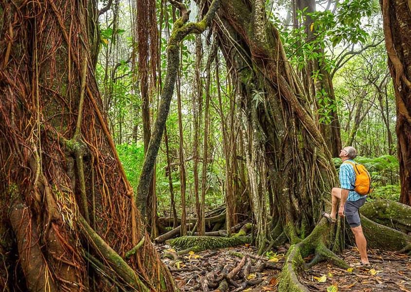 Rainforest Hiker in Hawaii