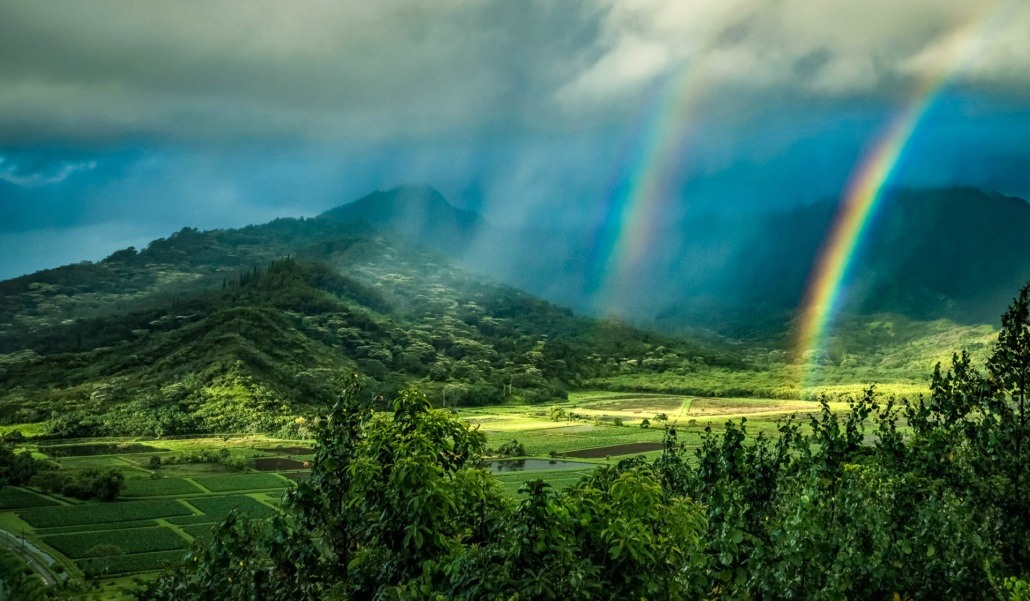 Kauai Taro Fields Rainbow