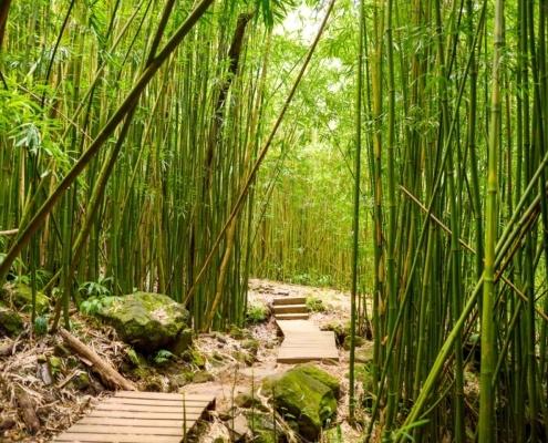Pipiwai Trail Bamboo Forest Stairs Hana Maui shutterstock