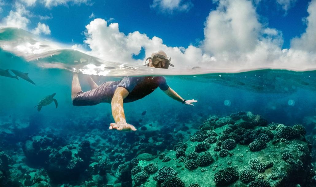 Snorkeler Underwater Reef Turtle Dolphin Hawaii