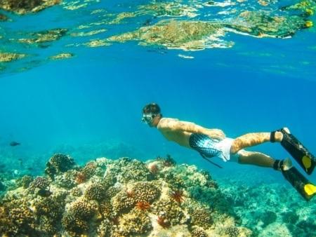 Snorkeler Underwater Reef Visitor Hawaii