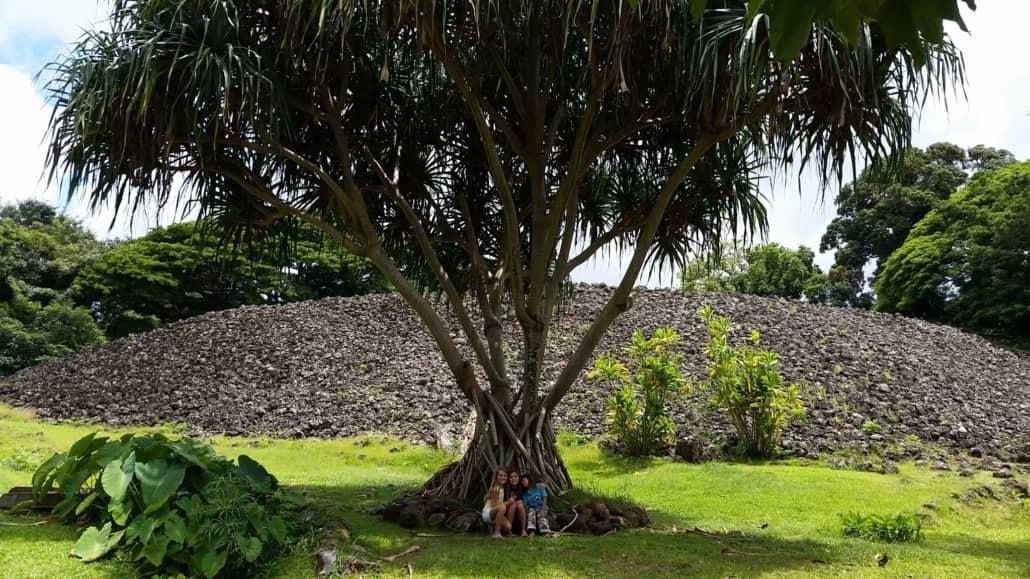 East Oahu Lauhala