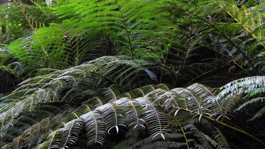 koolau waterfall hike ferns