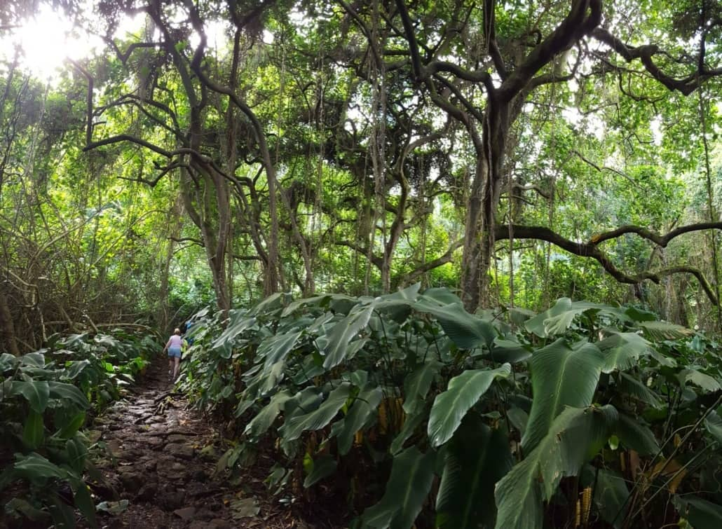 koolau waterfall hike trail
