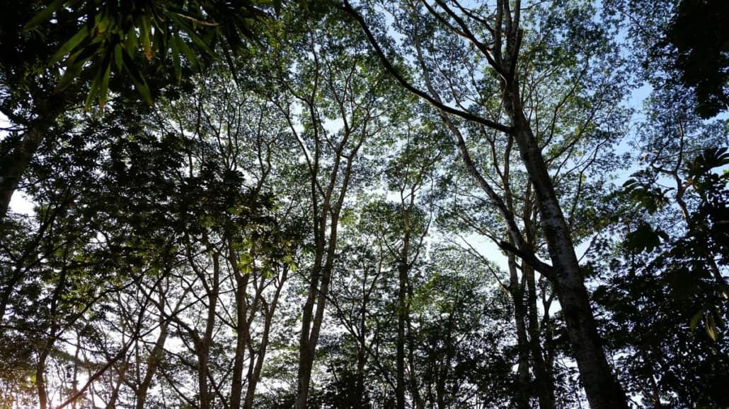 koolau waterfall hike trees