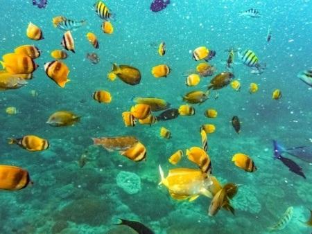 Ocean Reef Fish Underwater shutterstock