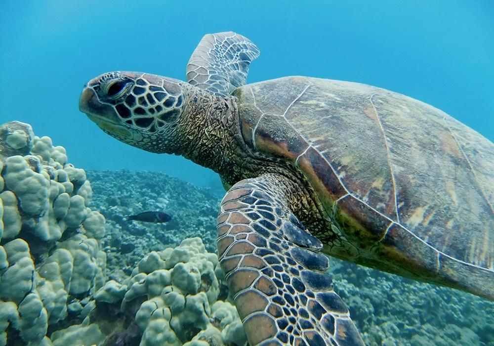 Turtle Enhanced