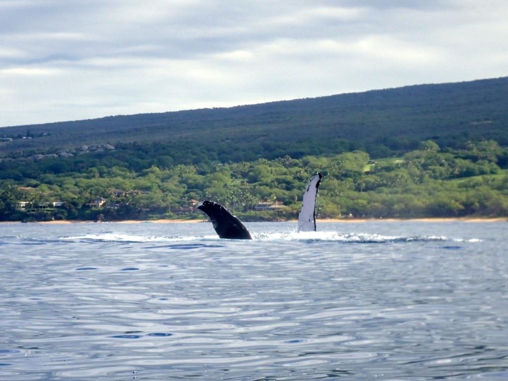 Whale Hug SR