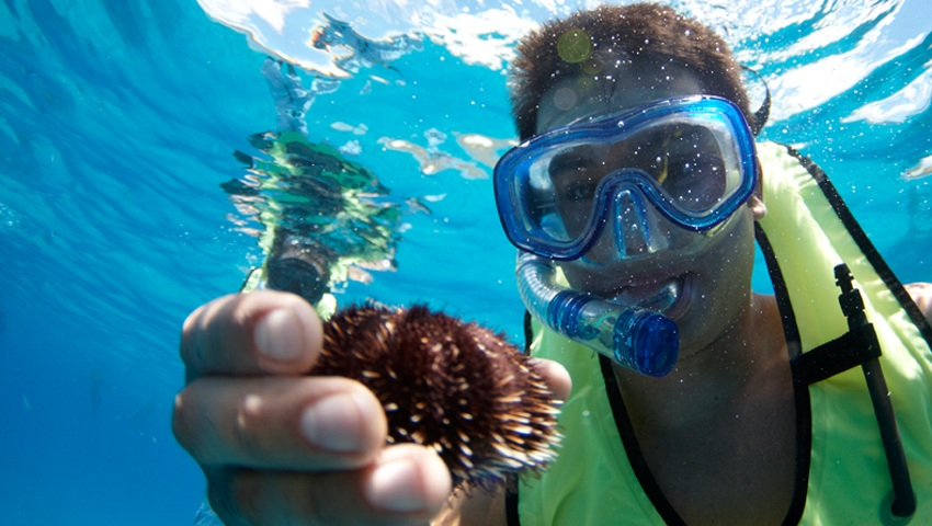 Kona Snorkel and Thrill Ride Sea Urchin