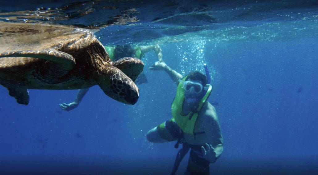 Ocean Joy snorkeler turtle