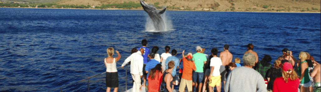 Ocean Joy Whale breach