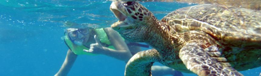 Honu Diving
