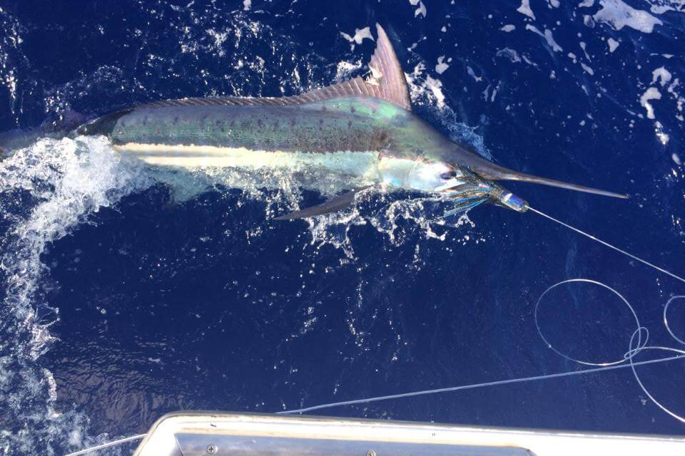 Bite Me Sportfishing Kona Blue Marlin Fish