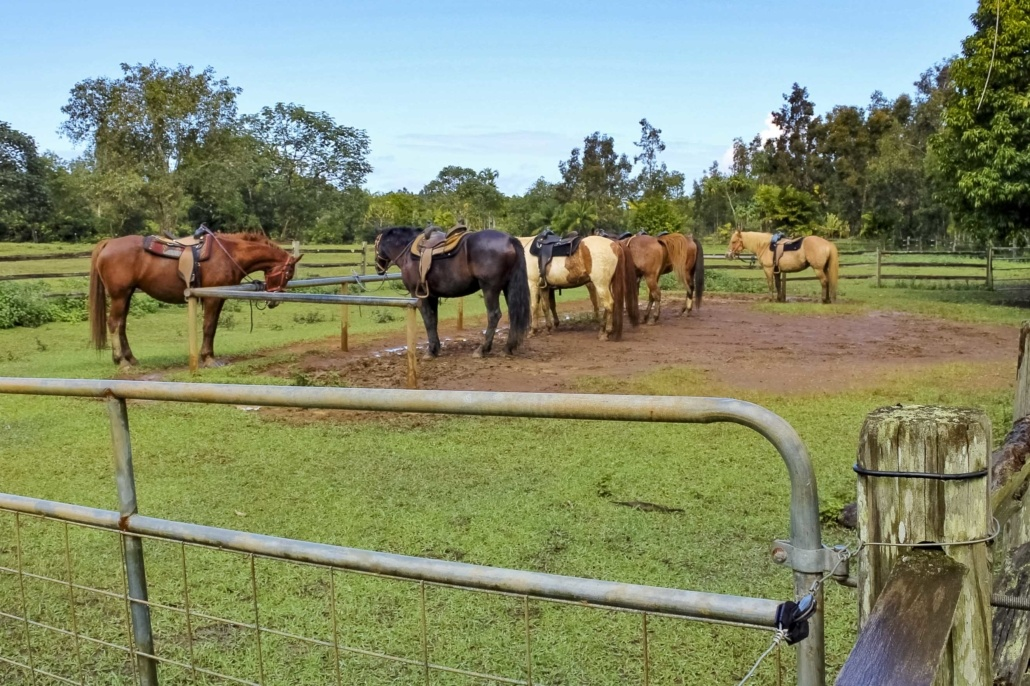 Horses Saddled Horseback Hawaii