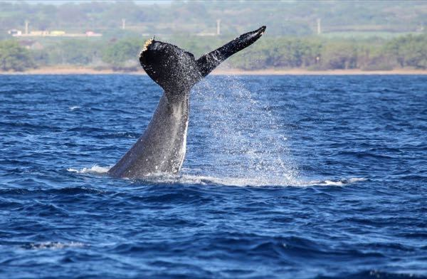 Quicksilver Whale Watch
