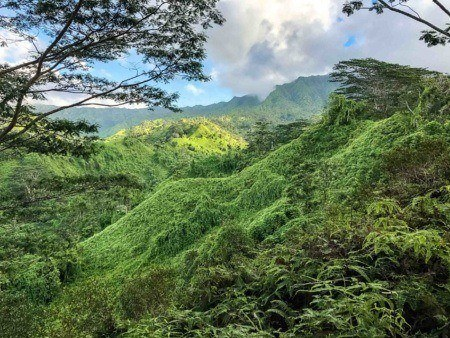 View from the Kuilau Hiking Trail Rainforest Kauai shutterstock