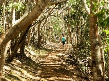 Waimea Canyon Hiking Trial Through Forest Kauai