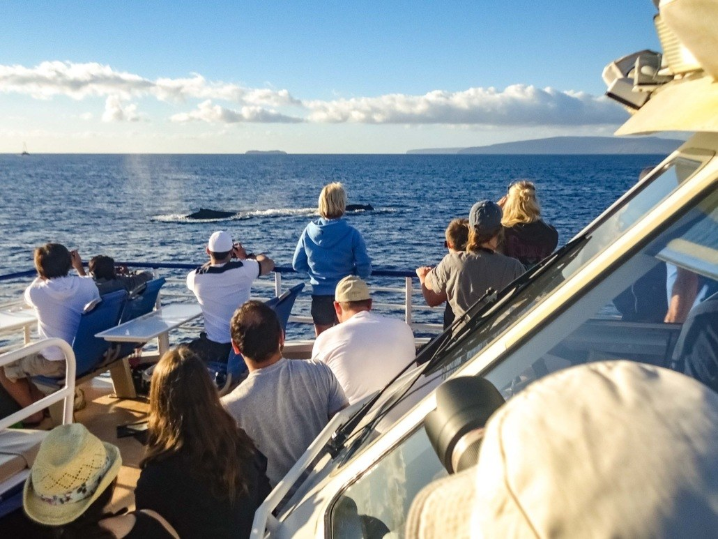 Whale Watching Boat and Whales Maui